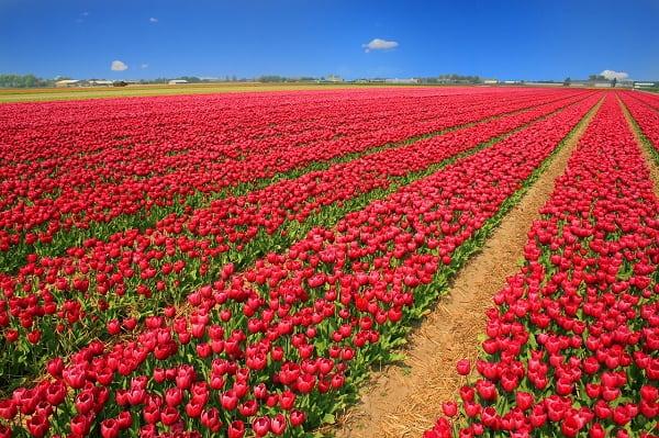 Jak zarobiliśmy 4 tys. zł na kwiatach w wieku 18 lat?